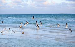 Great black-backed gull Stock Photos