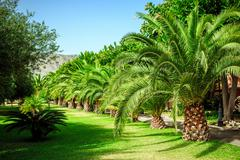 Walking alley with palms in sicily Stock Photos
