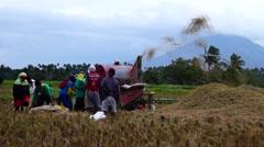 Threshing palay rice grains Stock Footage