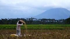Woman winnowing rice grain Stock Footage