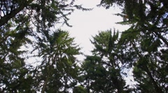Tree crowns to forest tilt Stock Footage