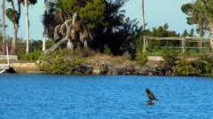 Bird sitting in clear blue waters Stock Footage