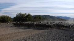 Argentina Gauchos - Gauchos Herding Sheep Stock Footage