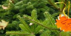 Panning to Christmas Tree price tag Stock Footage