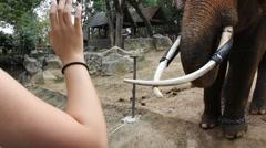 Tourist feeding elephant Stock Footage