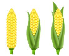corn vector illustration - stock illustration