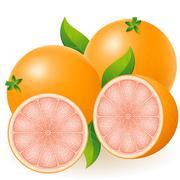 Stock Illustration of grapefruit vector illustration