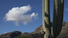 4K Lone Cloud Arizona Saguaro Cactus Time Lapse Stock Footage