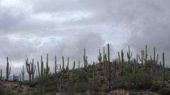 4K Wispy Clouds Hillside Saguaro Time Lapse - stock footage