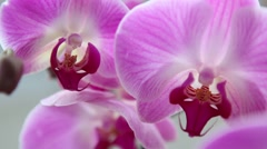 Elegant and expensive wedding flowers, pink orchids Stock Footage