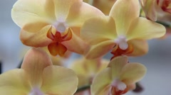 Beautiful Orchids flowers close up Stock Footage