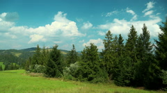 Time lapse of clouds and beautiful green coniferous trees. Video without birds Stock Footage