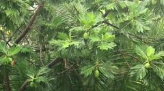 Tropical downpour in jungle. Rain and green trees Stock Footage