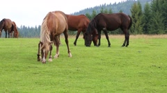 Beautiful horses on the grassland Stock Footage