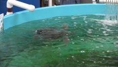 Injured green sea turtle in rescue center, ga, usa Stock Footage