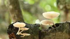 Wild Mushrooms On A Branch Stock Footage