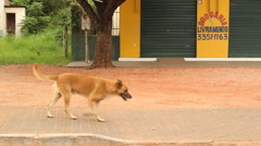 Stray Dog Wanders The Streets Of A Poverish Neighborhood Stock Footage