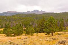 Distant mountain above a western forest Stock Photos