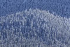 Snow covered mountain forest Kuvituskuvat