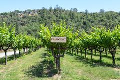 chardonnay grapes sign - stock photo