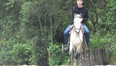 Horseback Riding, Horses, Animals Stock Footage