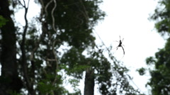 Large Spider Silhouette Stock Footage