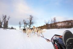 Dog sledding with huskies in the cold winter - stock photo