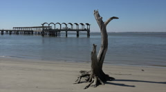 Dead tree and pier, driftwood beach, jekyll island, ga, usa Stock Footage