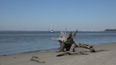 Dead tree and sail boat, driftwood beach, jekyll island, ga, usa Stock Footage