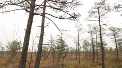 marshy grass swamp in latvia footage - stock footage