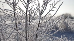 Epic Winter Forest Stock Footage