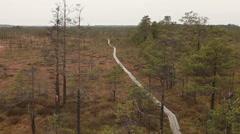 Wooden trail in bog swamp marsh land in latvia footage Stock Footage