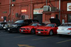 Mustang - stock photo