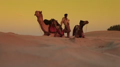 Natural low angle shot of  Camels in the desert with their master in the dawn of Stock Footage