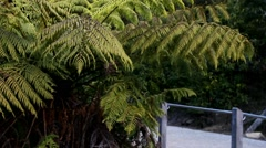 Temperate Rainforest 1 Stock Footage