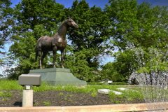 Monument to Man O War Stock Footage