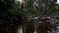Temperate Rainforest flowing stream Stock Footage