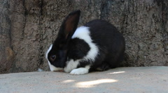 Rabbit eat carrot Stock Footage