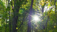 Slow pan of wooded area with leaves. Stock Footage