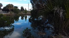 still shot of palm trees in brush next to water - stock footage