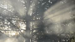 Smoke between the branches - stock footage