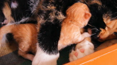Mother cat and kitten family Stock Footage