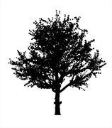 Red apple tree silhouette Stock Illustration