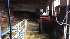 Farming livestock old barn used for sheep lamb testing and inoculation Stock Footage