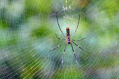 Black spider. Stock Photos