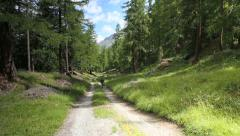 Man walking a dog in a Swiss forest. Stock Footage