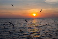 tranquil scene with seagulls flying at sunset - stock photo