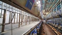 The rows with milking machines on a big dairy farm. Stock Footage