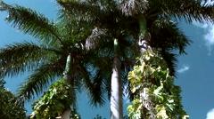 Mexico Yucatan Central America Chichen Itza 002 palm treetops in wind Stock Footage