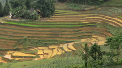 Zoom Out of Scenic Rice Farm Terraces in Northern Vietnam -  Sapa Vietnam Stock Footage